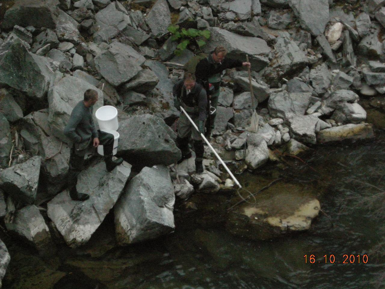 ausfischen-crestawald-6