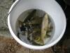 ausfischen-crestawald-8