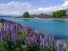 fischen-neuseeland-2012-4